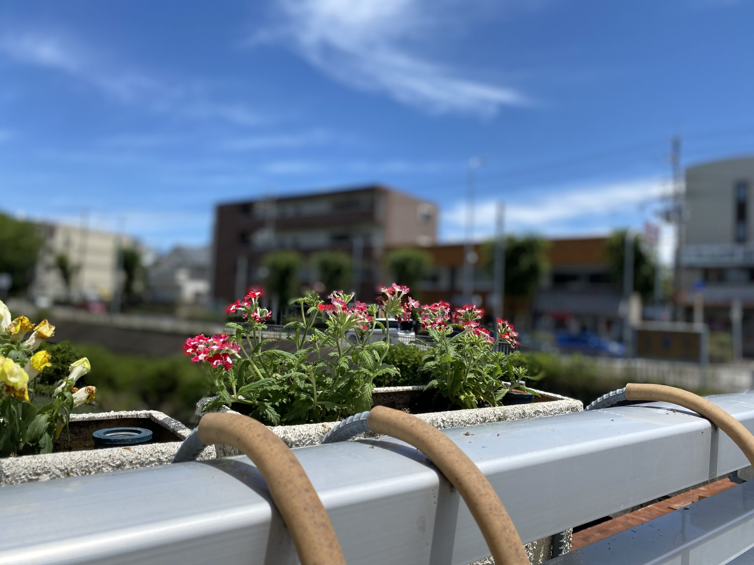 橋の欄干 プランターの花植え