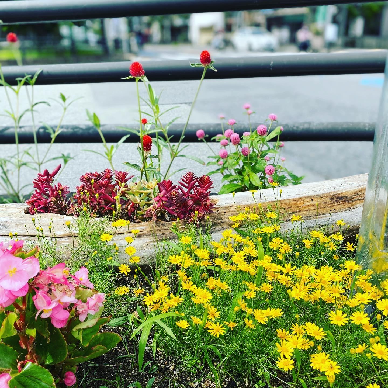 千里川花壇~花盛りです~